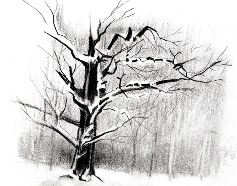 Comment dessiner un arbre sous la neige ? | Apprenez-a-Dessiner.com