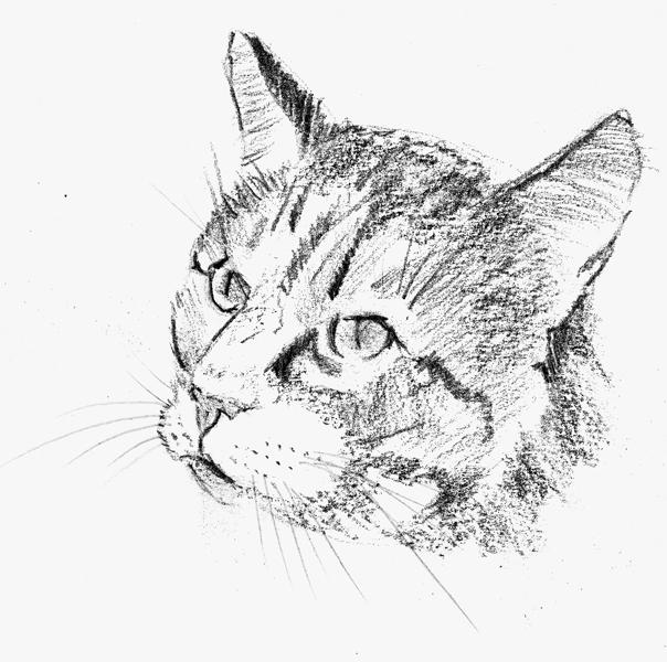 Comment dessiner une t te de chat apprenez a - Comment dessiner une star ...